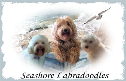 Seashore_Labradoodle_Logo2-495x319